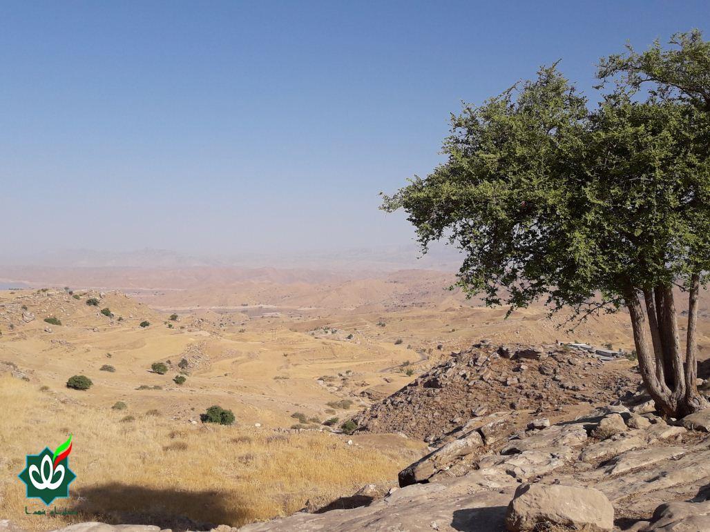 گلزار شهدای روستای پاقلعه (اسلام آباد)